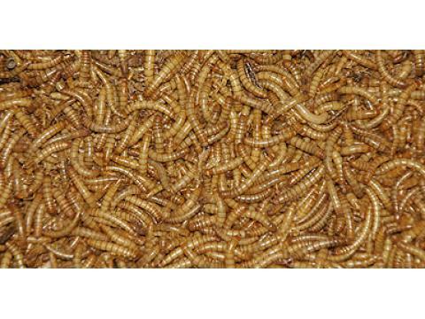 68 973 meelwormen