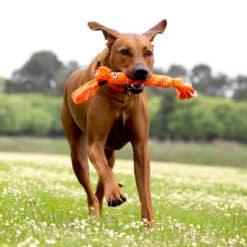 Rogz for Dogz Scrubz