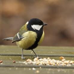 Buiten vogels